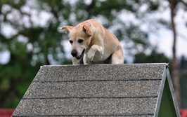 sporthundetraining